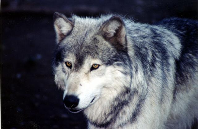 [AF>Libristes] Loup72